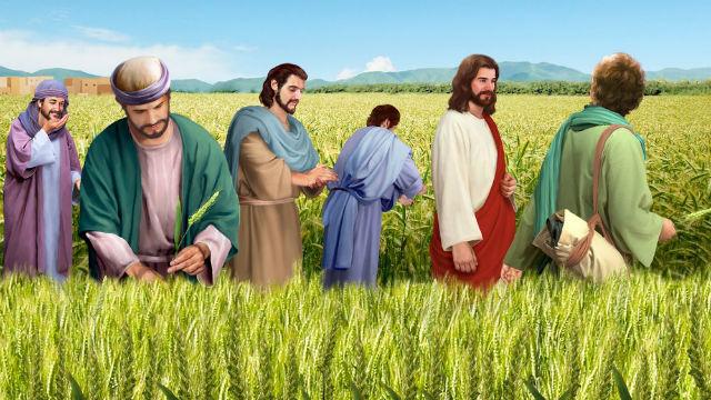 耶穌 門徒 麥子 安息日